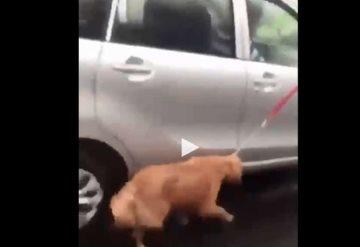 Video: Arrastró a su perro mientras conducía automóvil