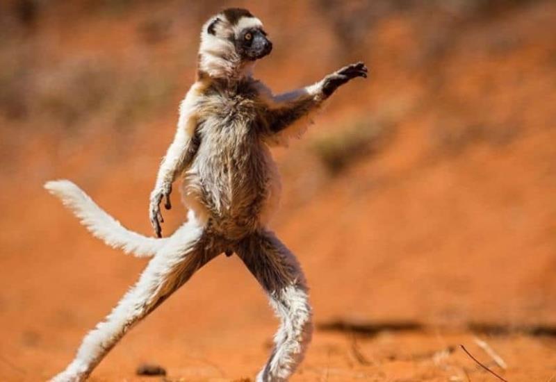 #FOTOGALERÍA Los momentos más graciosos del mundo animal