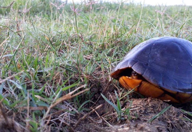 Extermina el hombre a tortugas en Pantanos de Centla