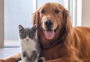 Castigarán con cárcel robo de mascotas