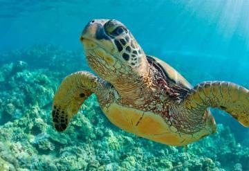 Nueva meta ambiental de Perú: reducir a la mitad muertes de tortugas marinas