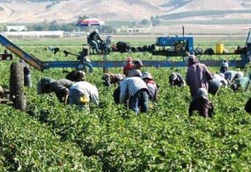 Trabajarán más de 200 jornaleros de Chihuahua en Canadá
