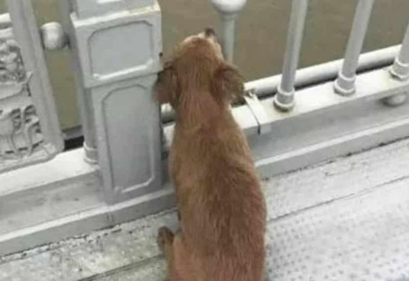 Perrito espera a su dueño en el puente donde se suicidó