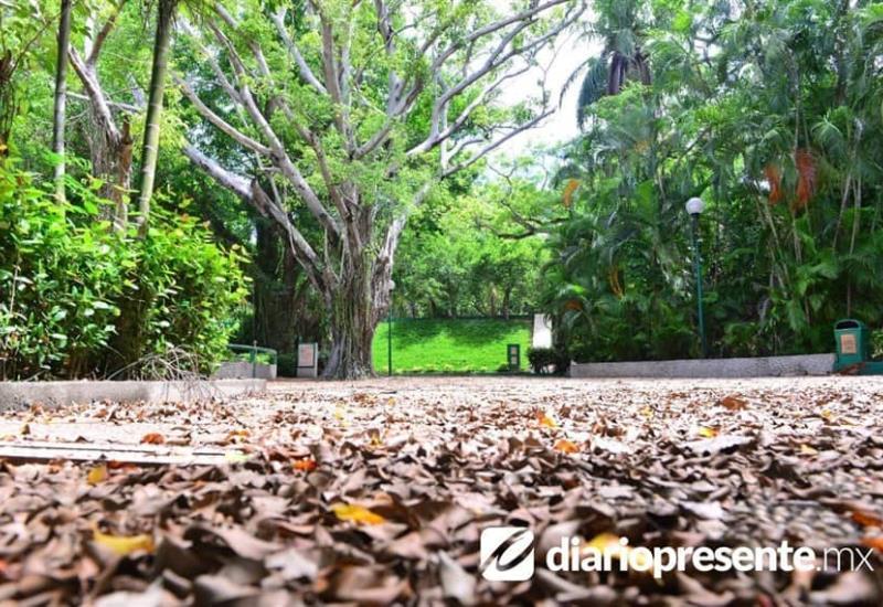 En completa soledad se encuentra el Parque Museo La Venta