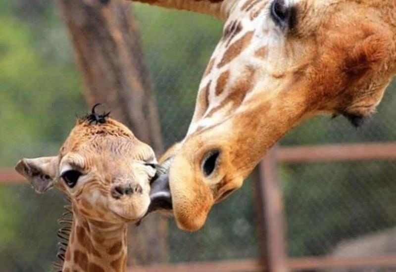 Nacen 30 especies en el zoológico durante contingencia