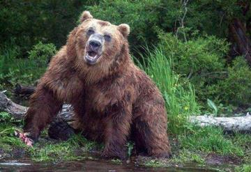 Oso se lanza contra un grupo de turistas en un parque natural en Siberia